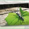 Pfullingen bleibt NABU-Naturwaldgemeinde