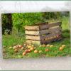 Kostenlose Schnittkurse beim Obst- und Gartenbauverein Lichtenstein