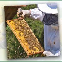 Honig mitten aus Pfullingen – Ein Blick über die Schulter von Hobbyimkerin Doris Wildner