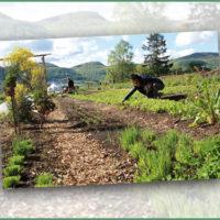 Frisch, bio und von Hand gepflückt: Gärtnern auf der Pfullinger Röt